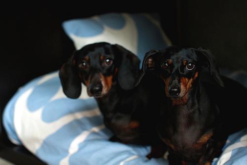 perros en cama para mascotas