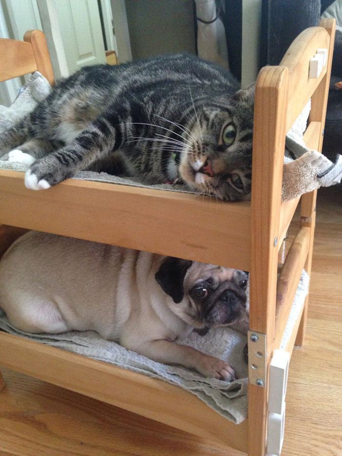 litera para gato y perro ikea