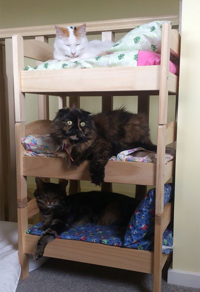 litera para gatos de ikea