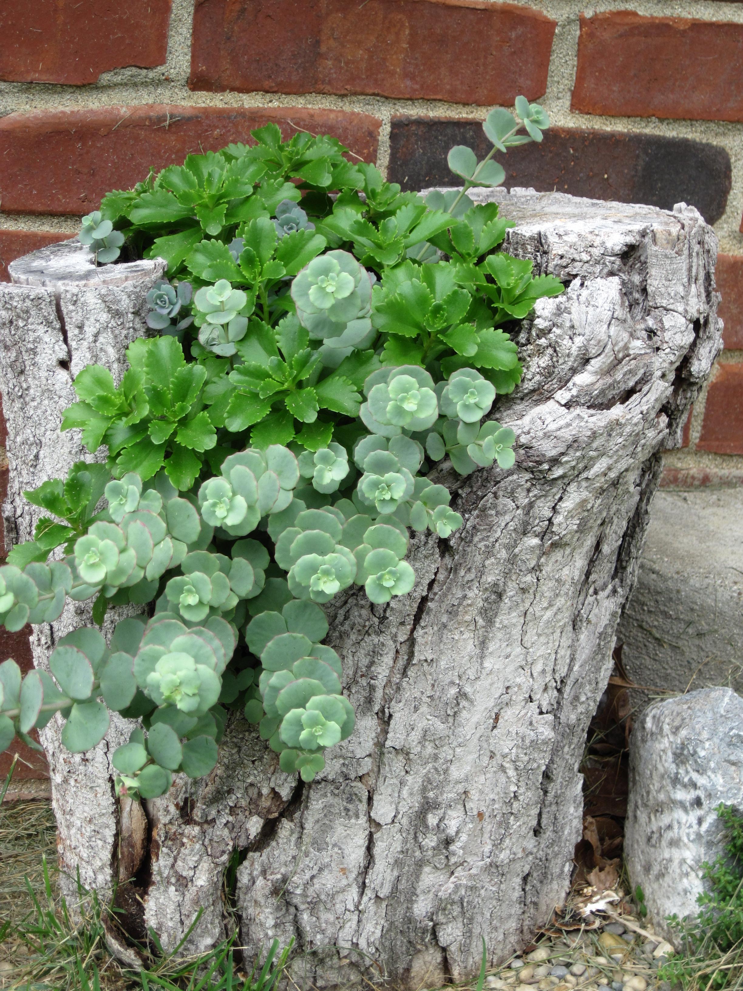planta dentro de un trozo de tronco