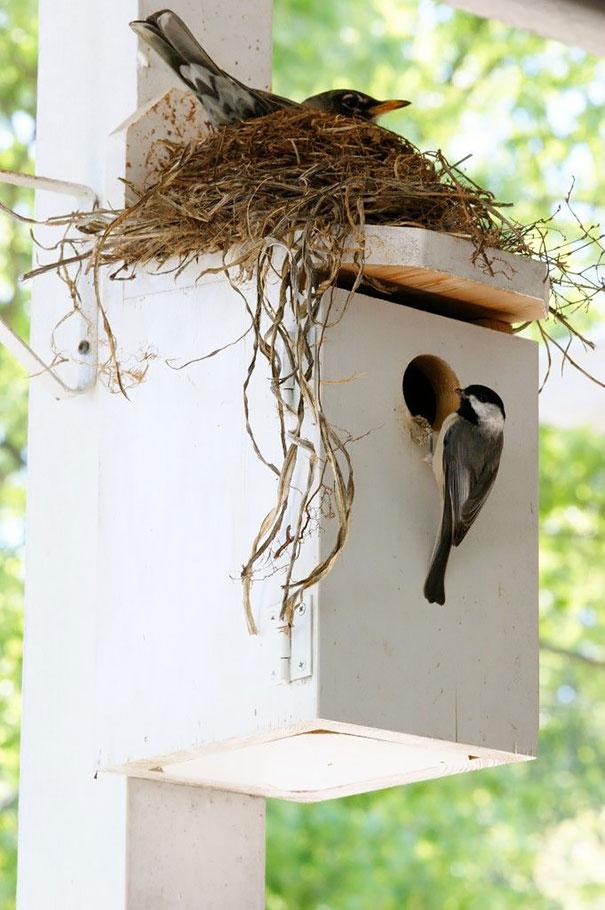 casita para pájaros en color blanca