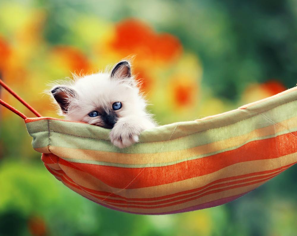 hamaca de colores con un gato dentro