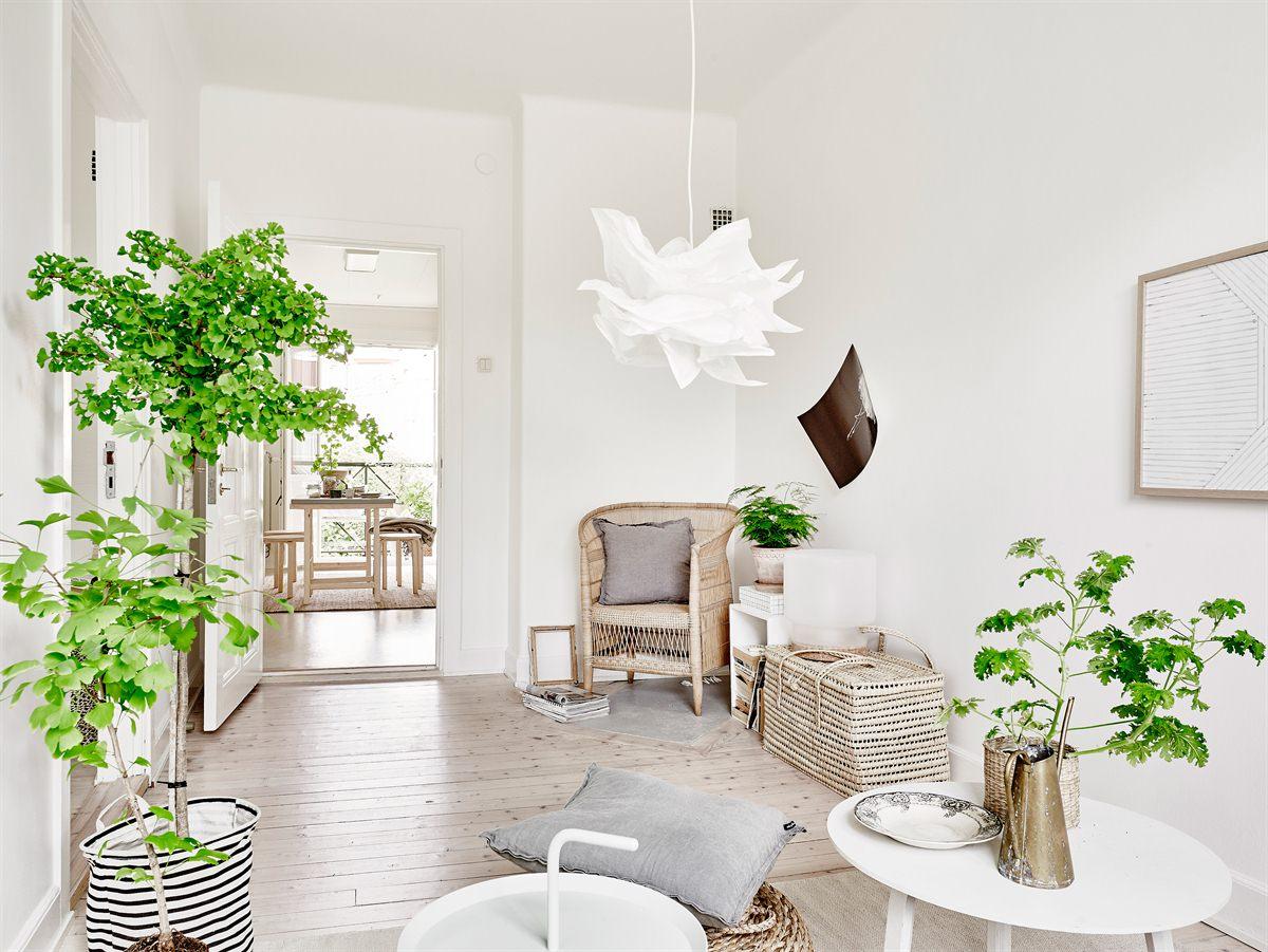 salón en color blanco y decorado con plantas