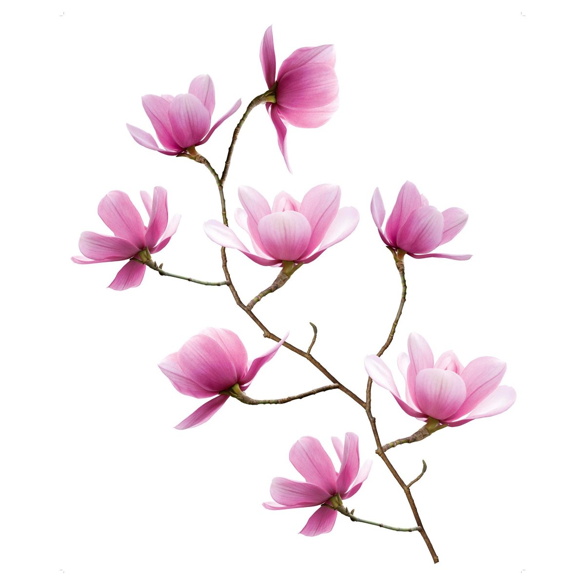 vinilos decorativos de Ikea - mod. Slätthult magnolia