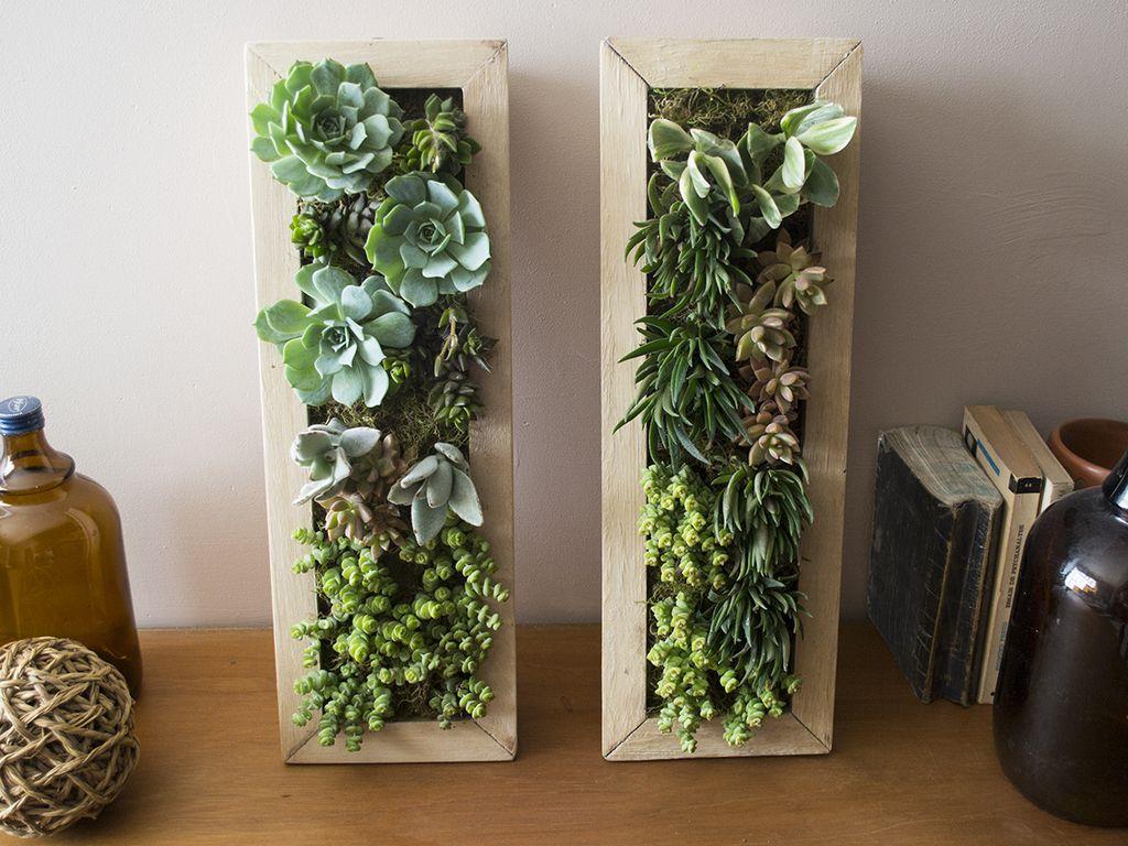 jardín vertical - cuadritos de plantas
