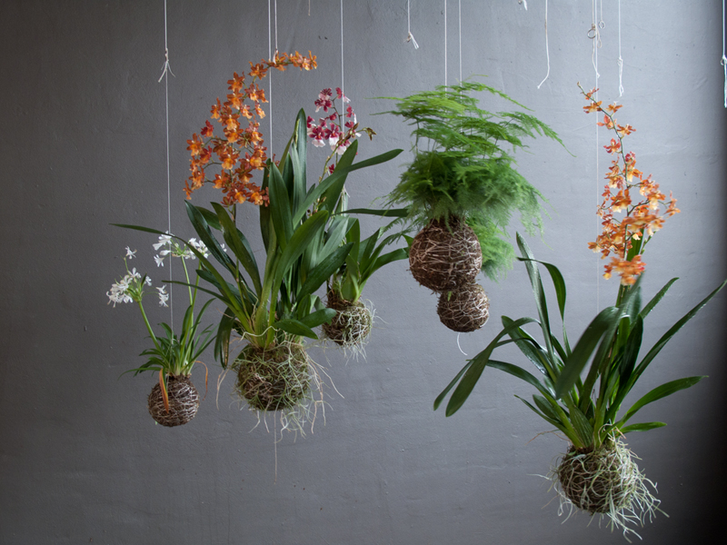 jardín vertical - jardín colgante