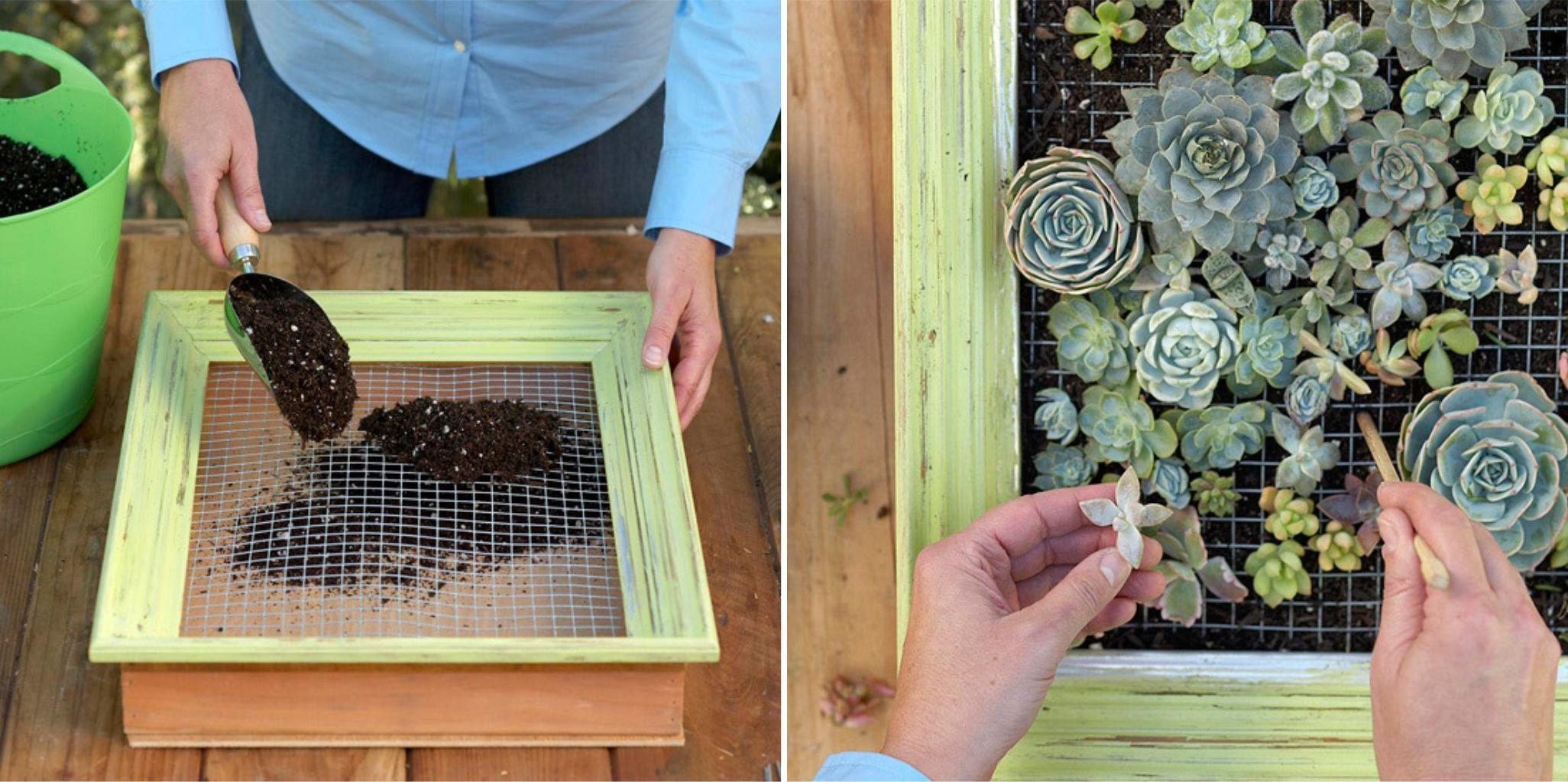 jardín vertical - consturir cuadro vegetal