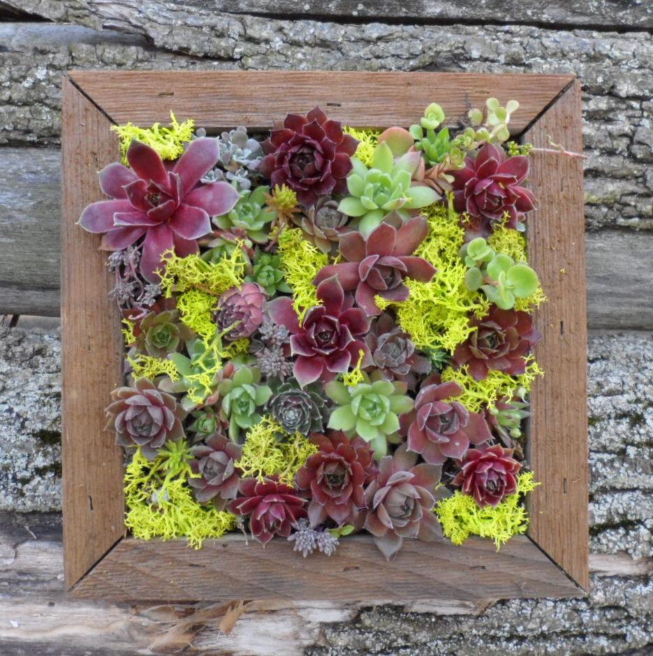 jardín vertical - cuadro de plantas