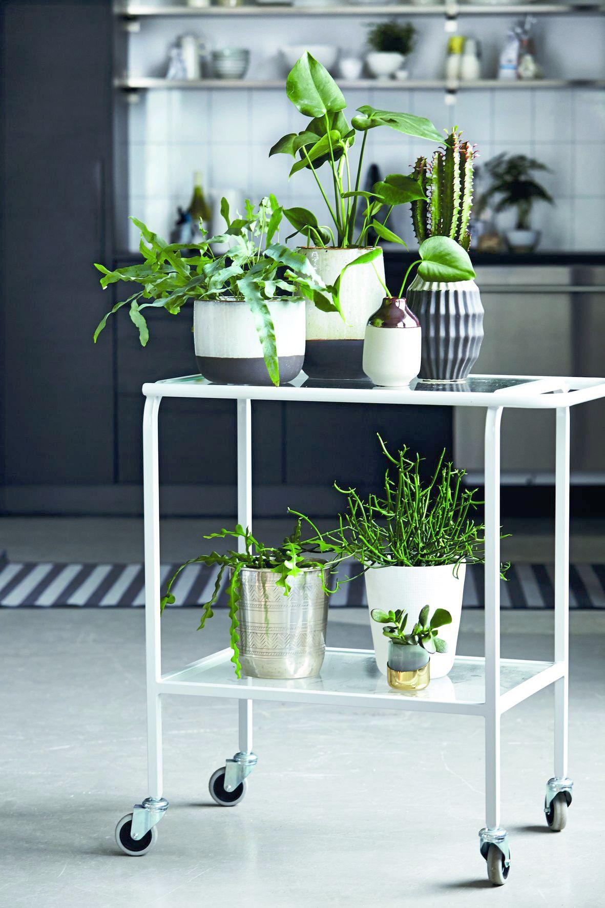 decoración con encanto - plantas
