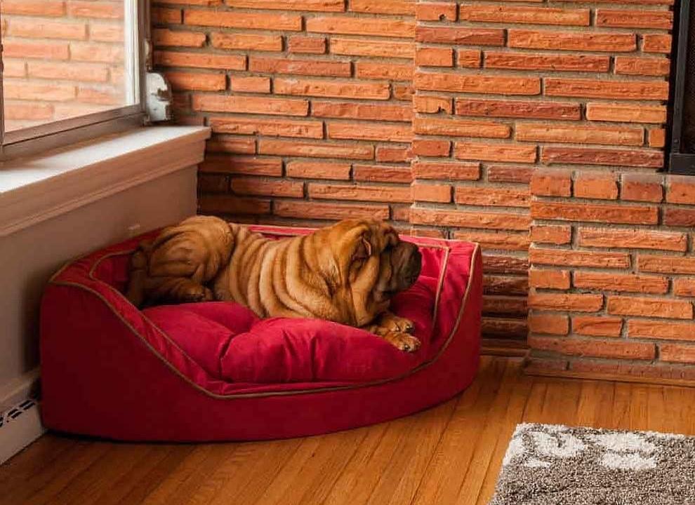 camas para perros - Un rincón para el descanso