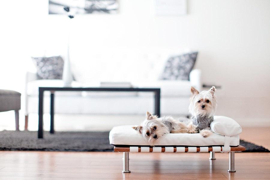 camas para perros - Modelos de luxe