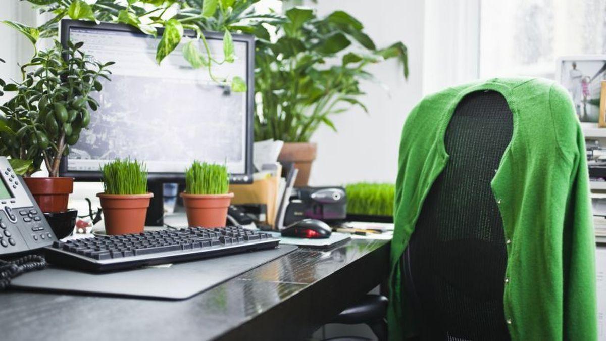 mobiliario de oficina_ plantas