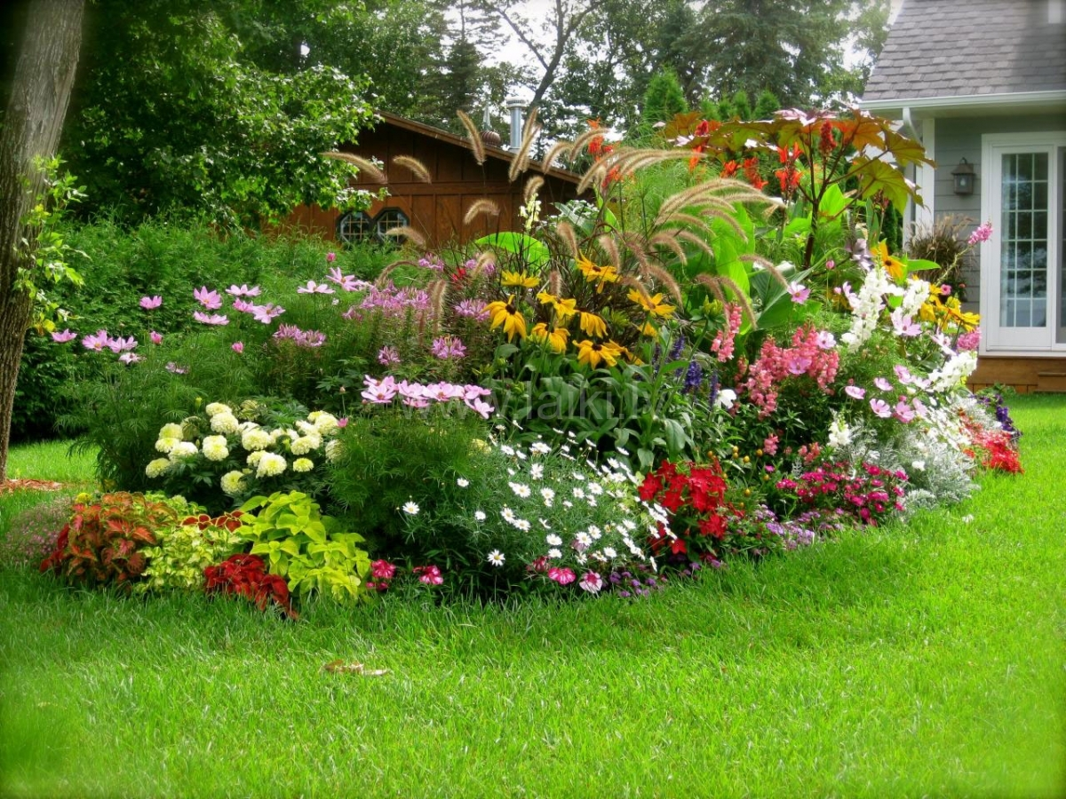 Jardín - plantas