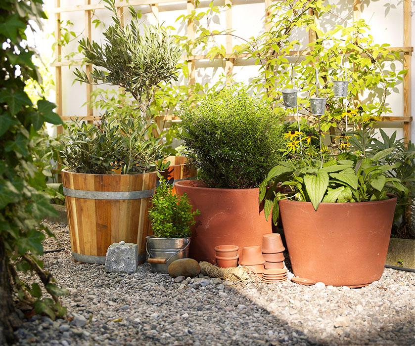 Jardín - macetas
