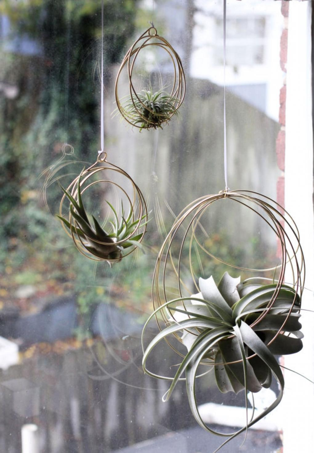 Plantas de interior - menos usuales