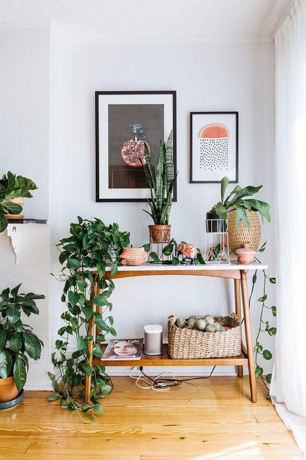 Mid Century Modern - plantas