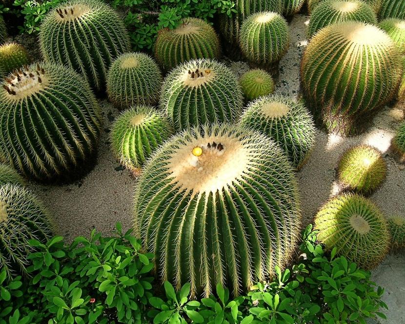 cactus en el exterior