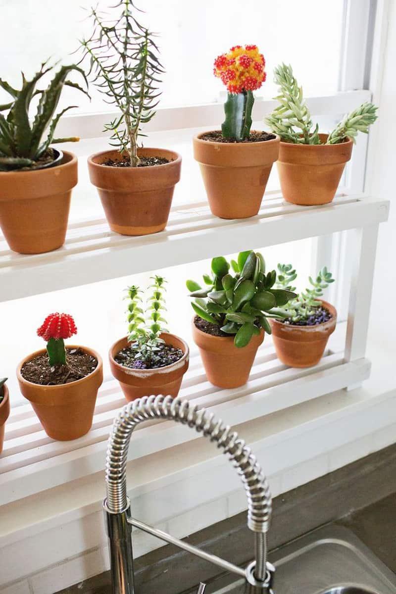 cactus en la cocina
