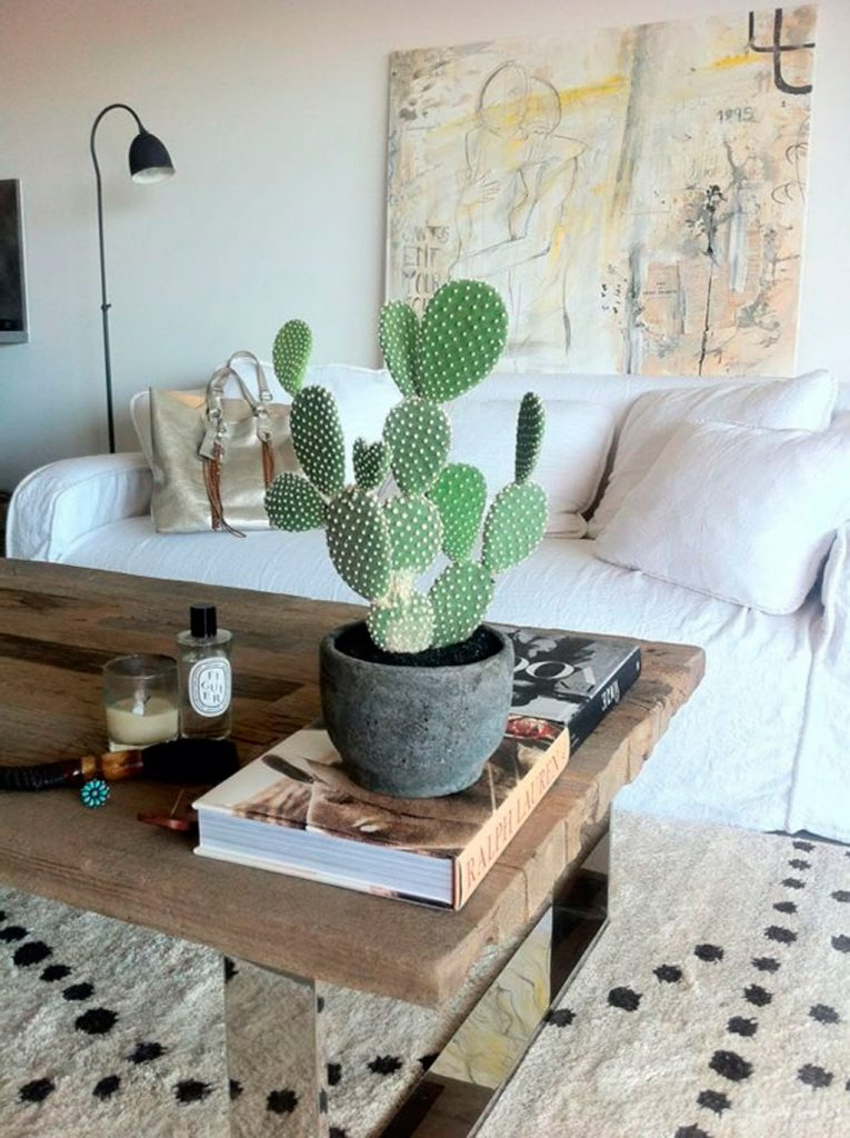 cactus - origen