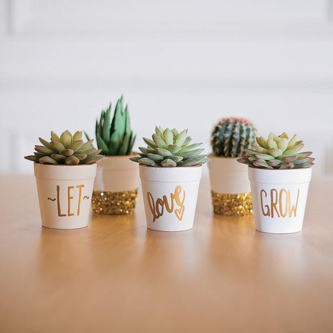 cactus - simbologia