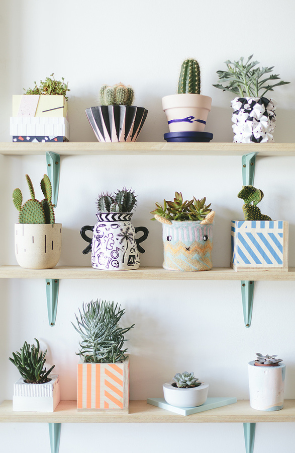 cactus pequeños