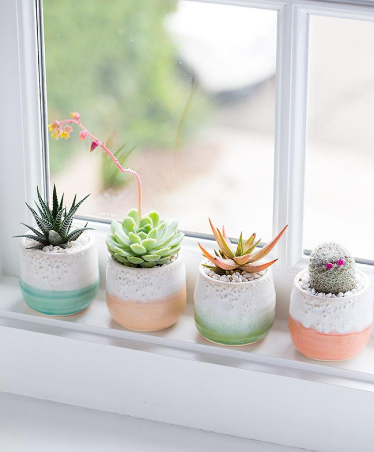 cactus en la ventana
