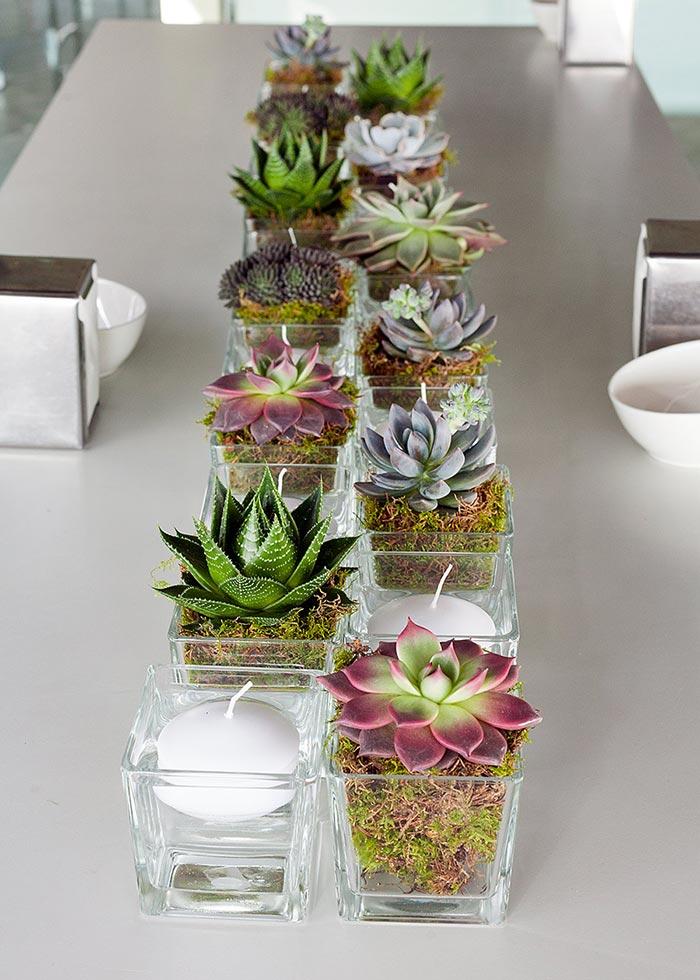 cactus- variedades