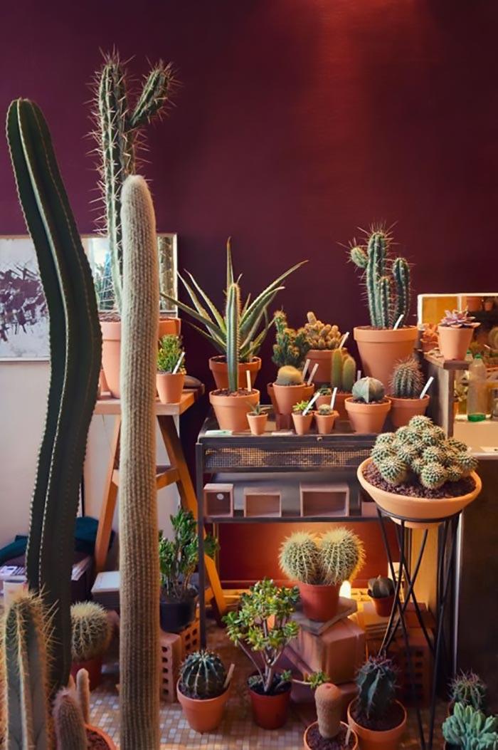 cactus - cuidados