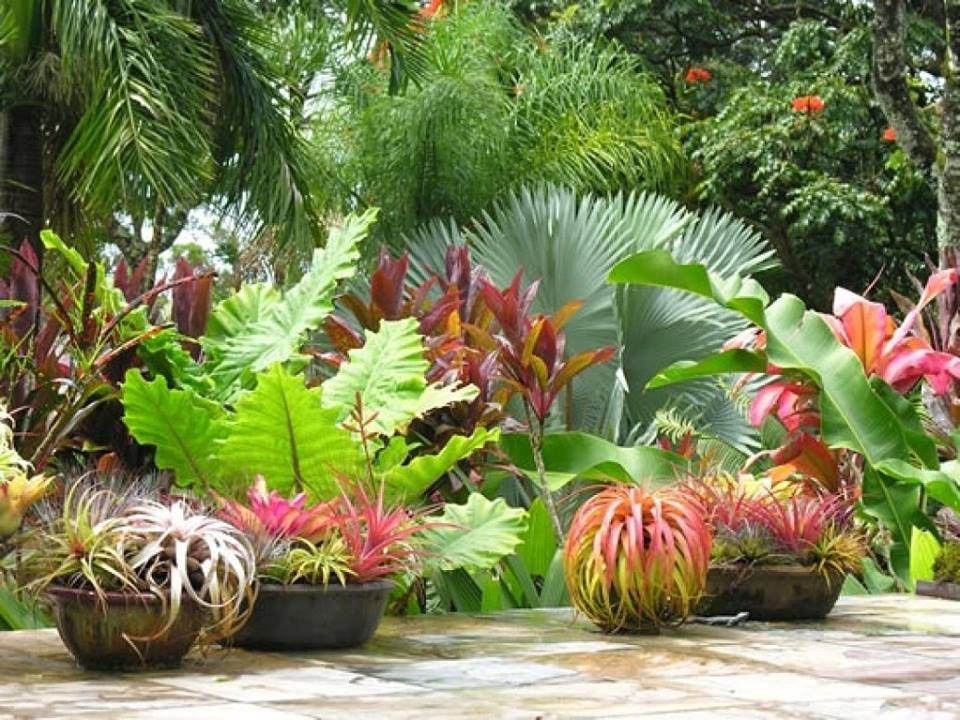 Estilo tropical - jardín