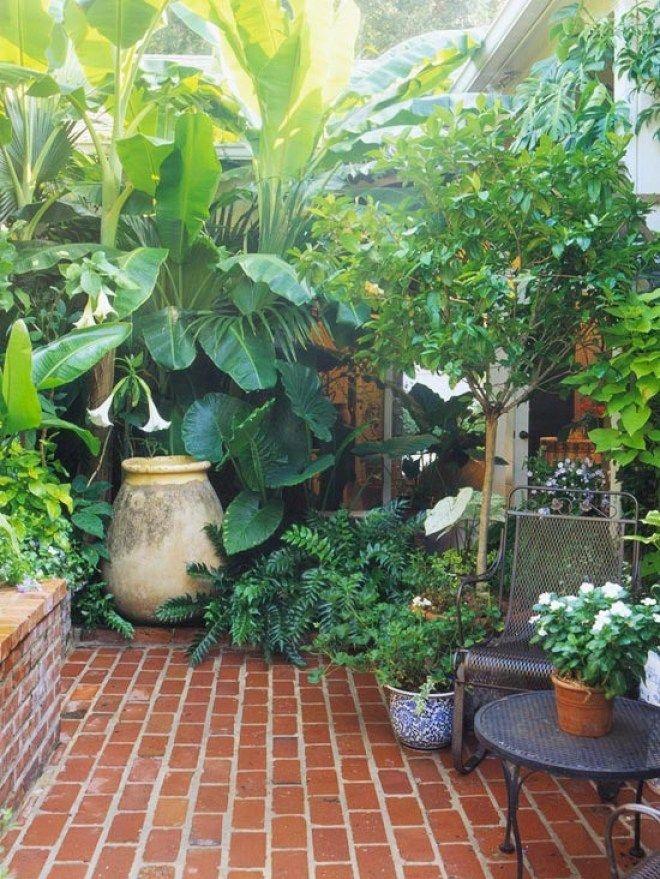 jardín pequeño - plantas