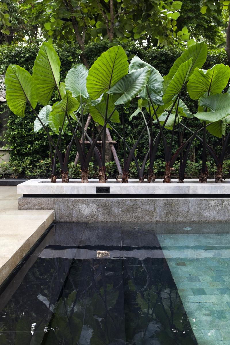 Revestimientos de piscina - azulejos