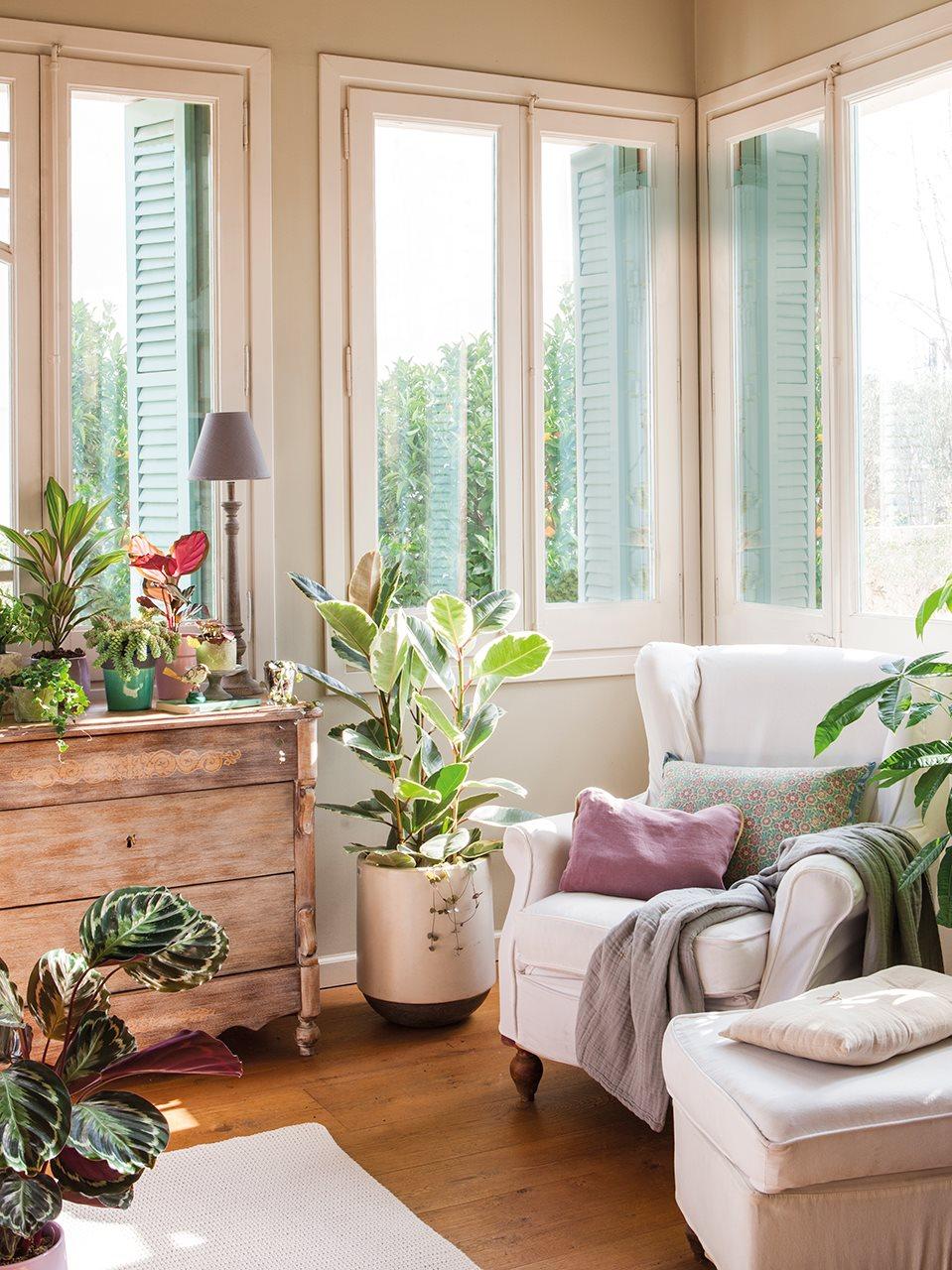 Salones rústicos con plantas