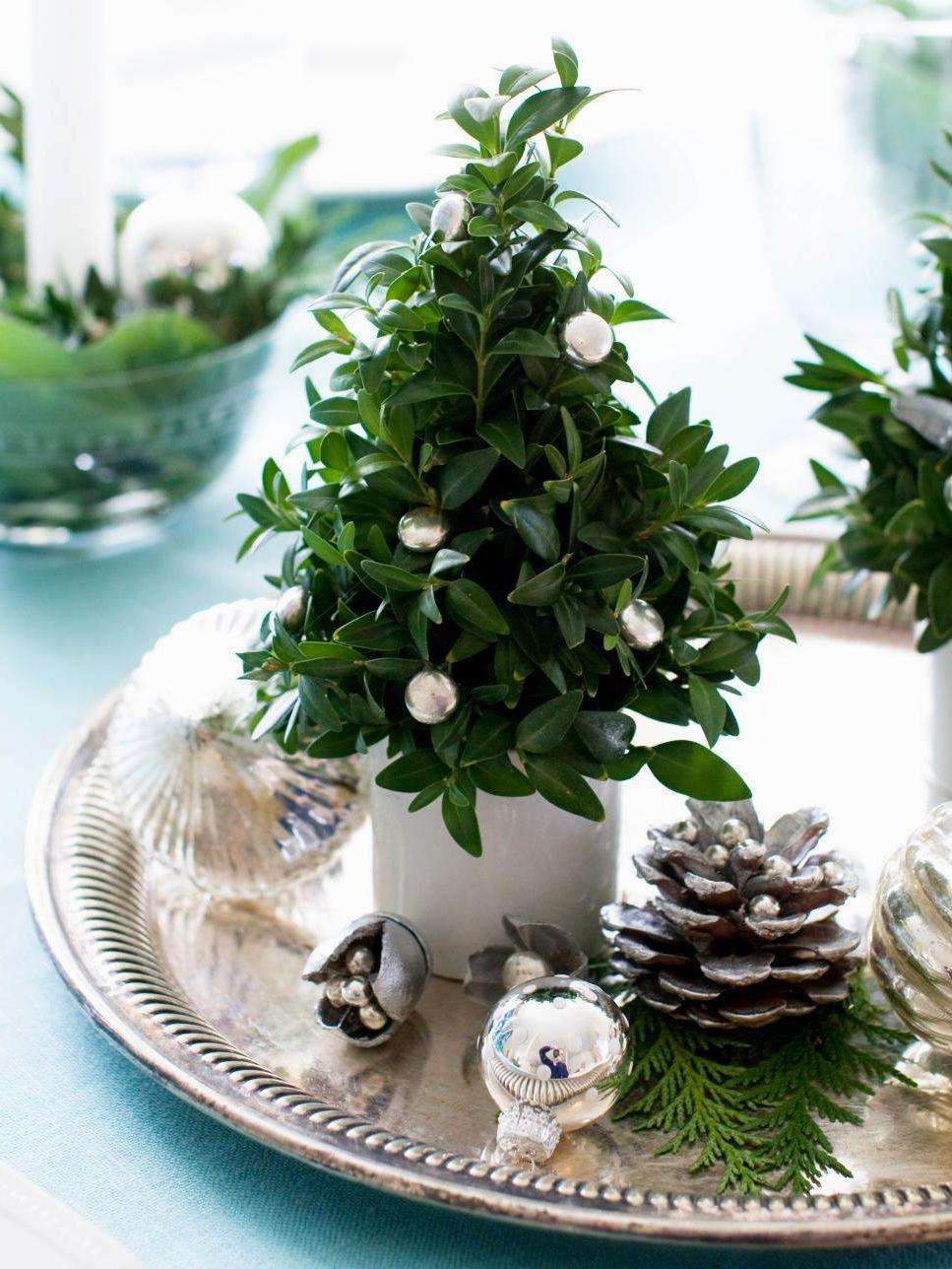 Navidad - plantas