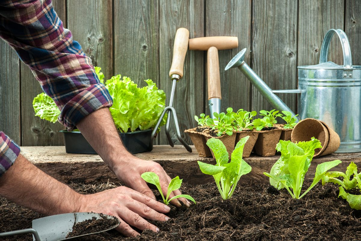 renueva tu casa - cultivos