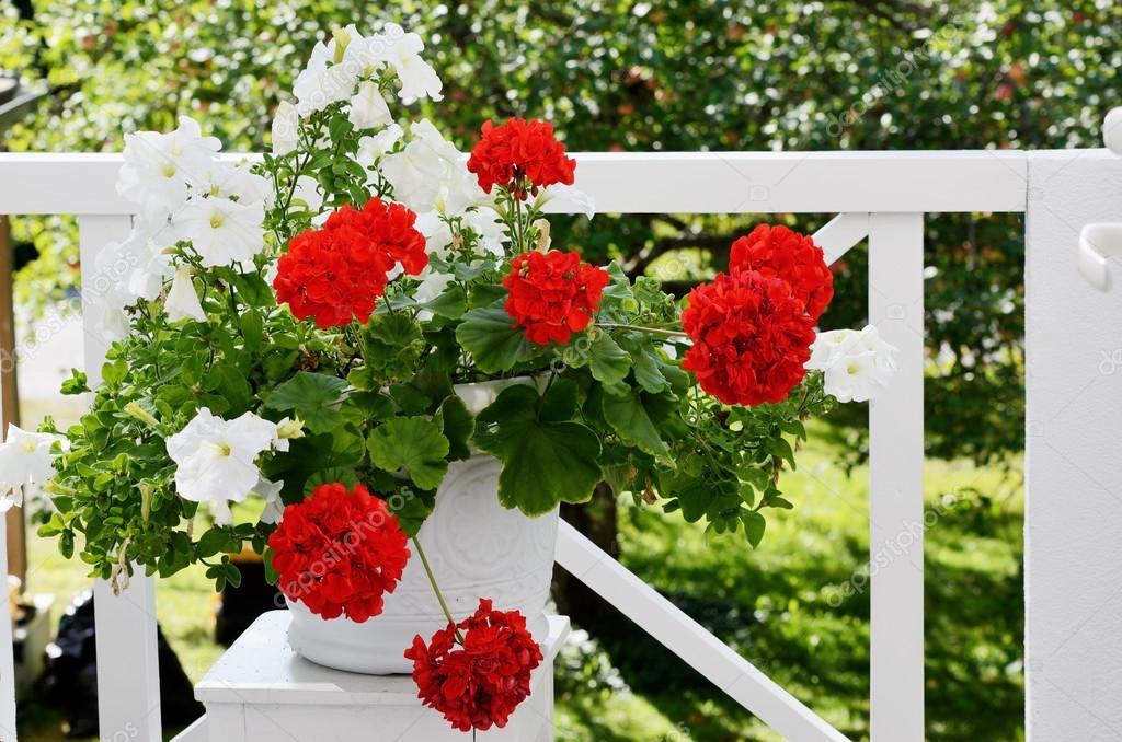 Plantas de exterior - Geranio