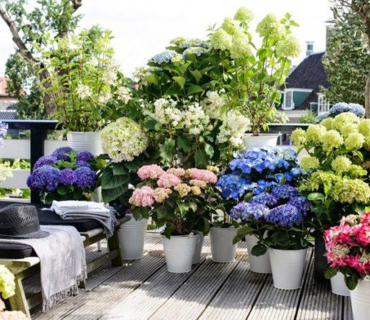Plantas de exterior para terrazas