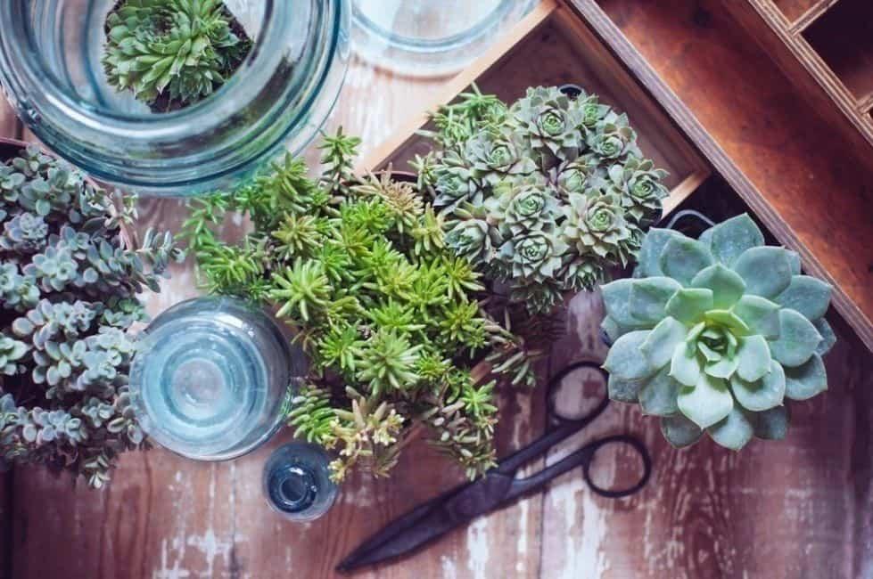 claves para decorar tu hogar con suculentas 6