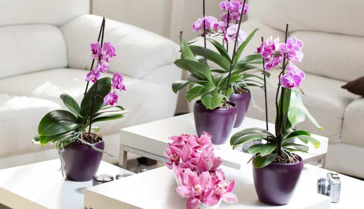 claves para decorar con orquideas tu hogar 1