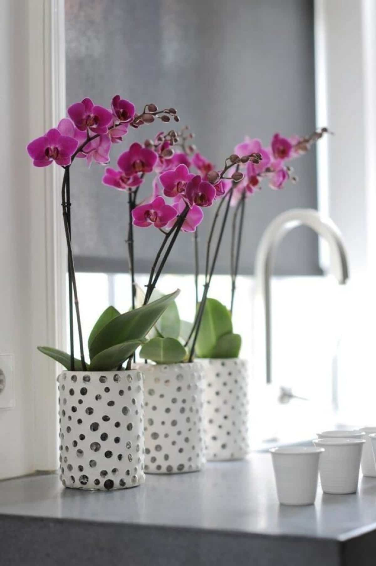 claves para decorar con orquideas tu hogar 10