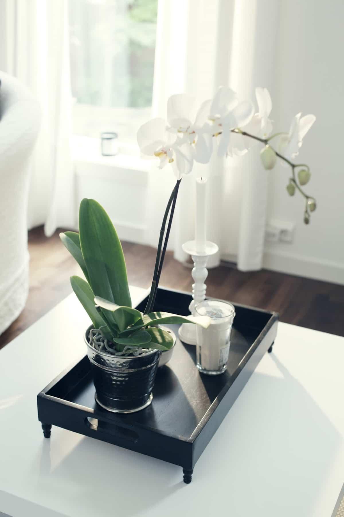 claves para decorar con orquideas tu hogar 11
