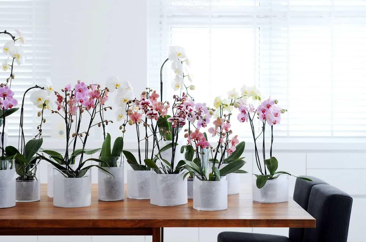 claves para decorar con orquideas tu hogar 12