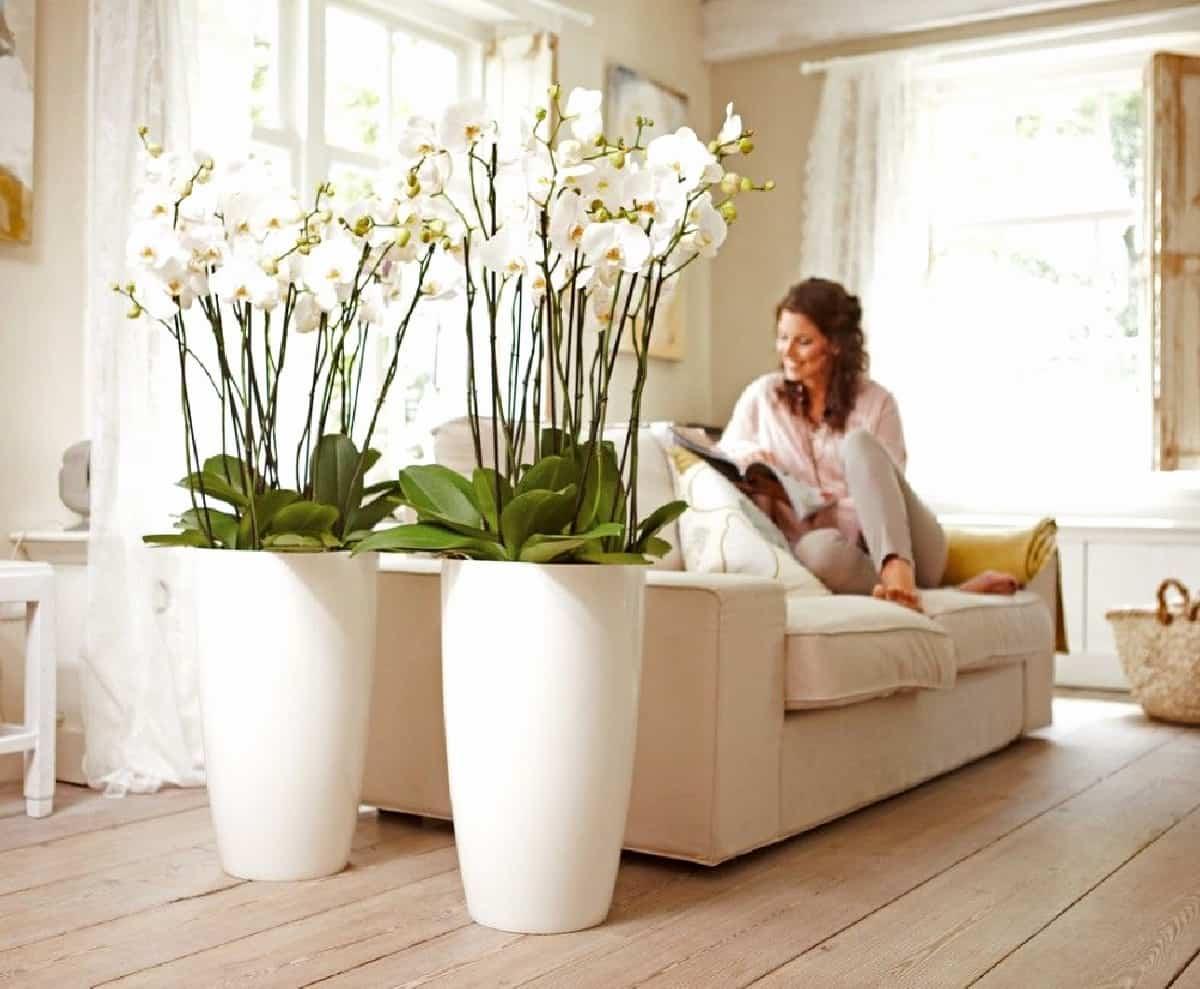 claves para decorar con orquideas tu hogar 13