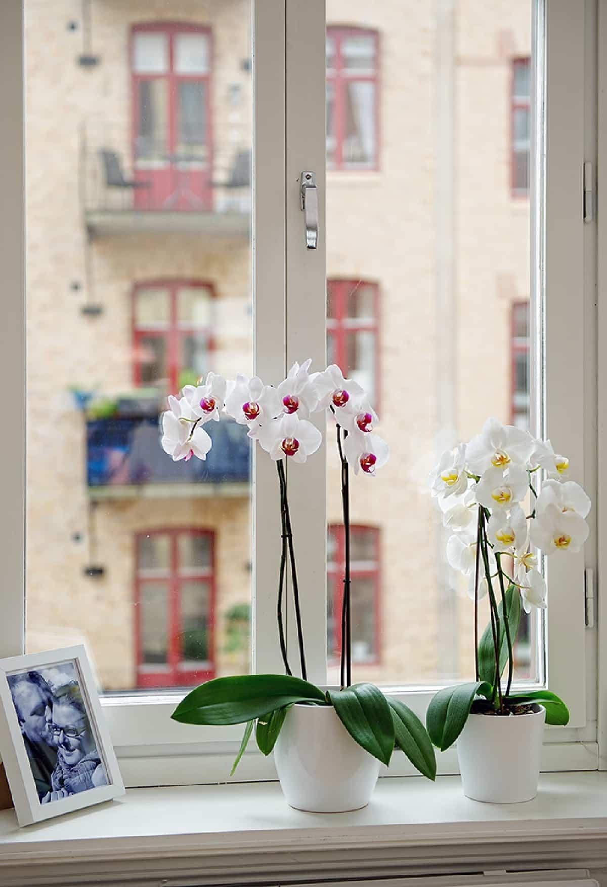 claves para decorar con orquideas tu hogar 14