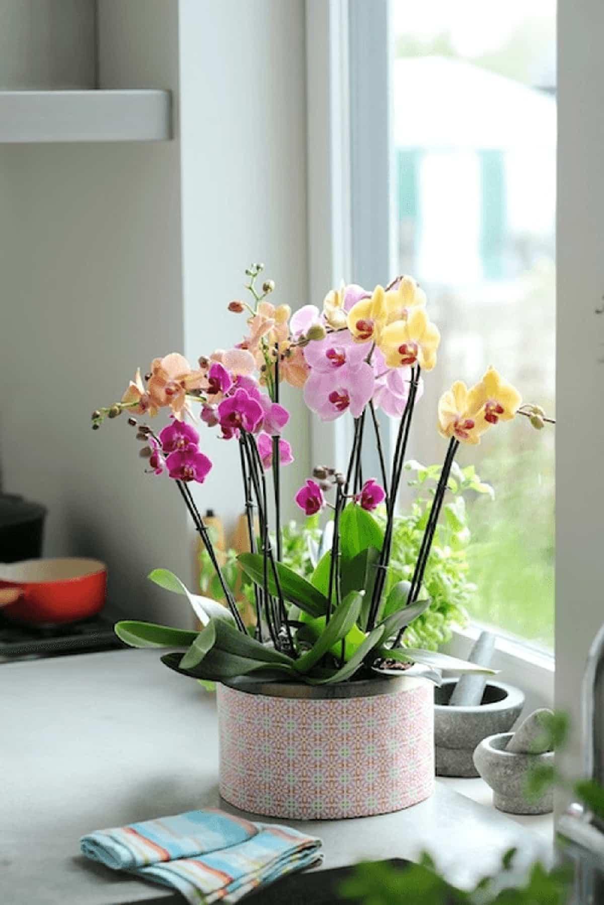 claves para decorar con orquideas tu hogar 4