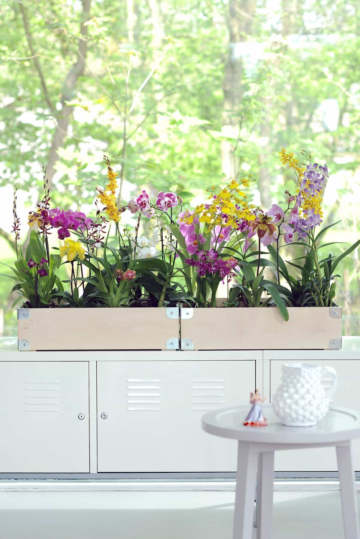 claves para decorar con orquideas tu hogar 5