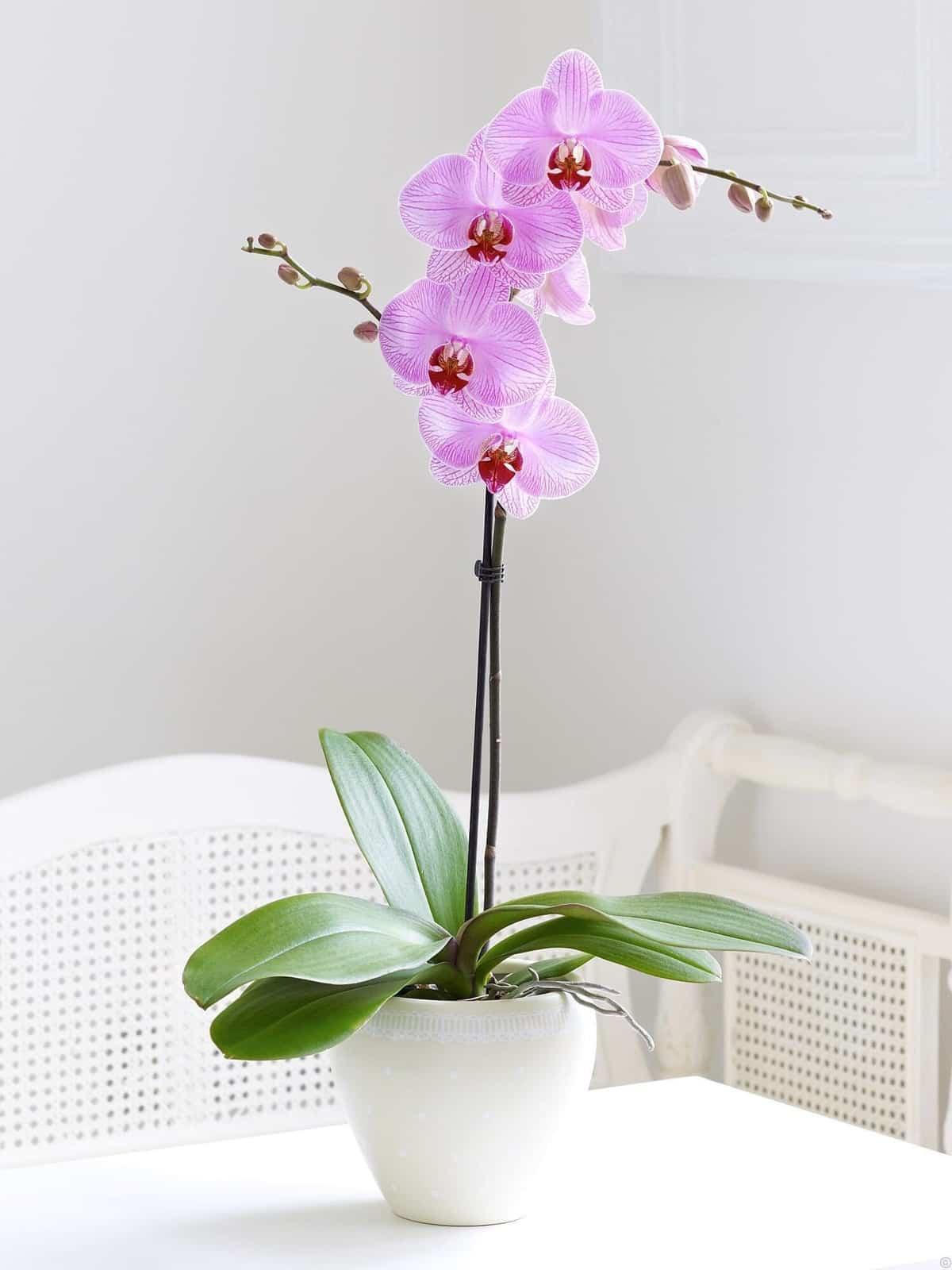 claves para decorar con orquideas tu hogar 6