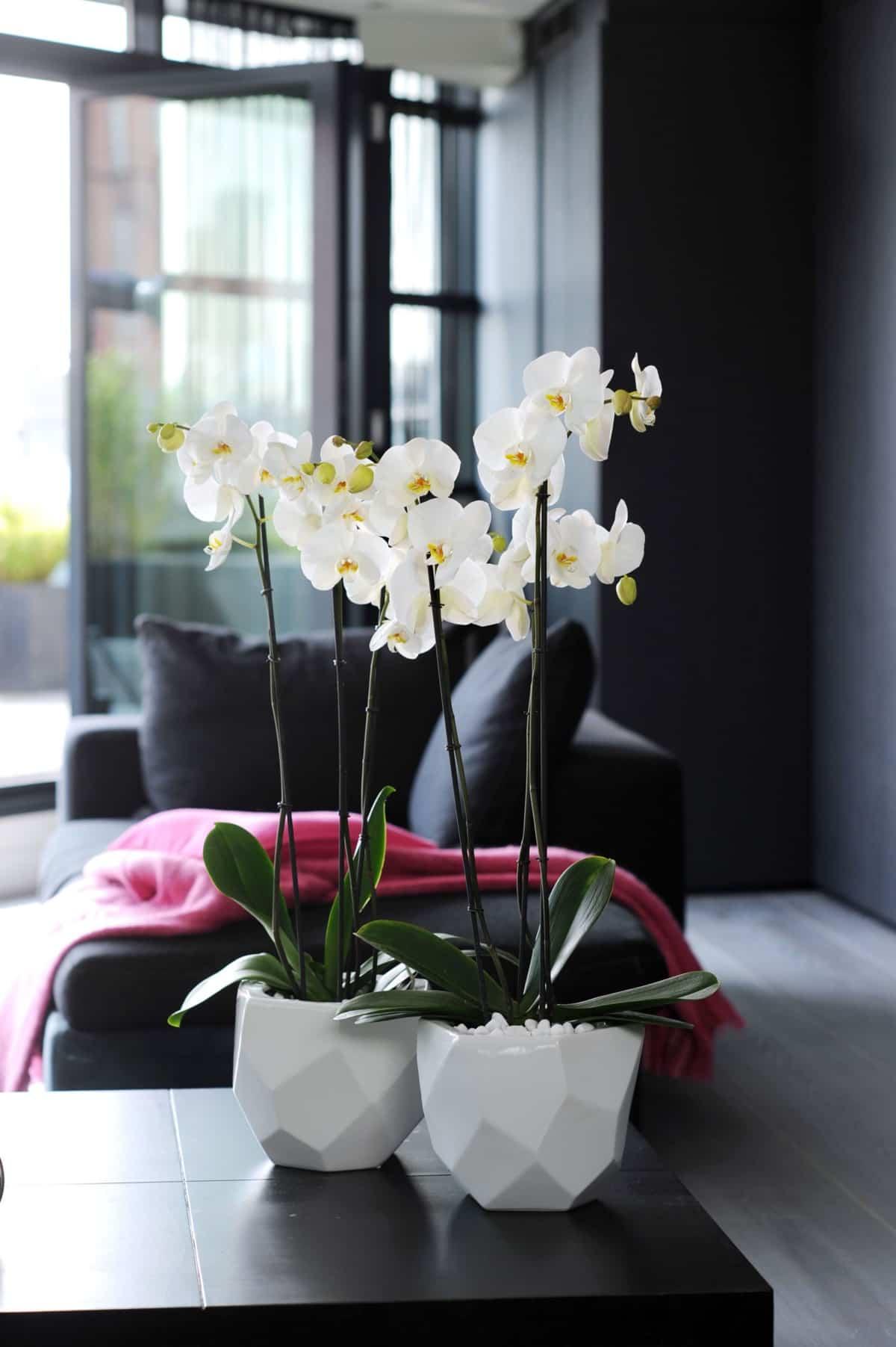 claves para decorar con orquideas tu hogar 8
