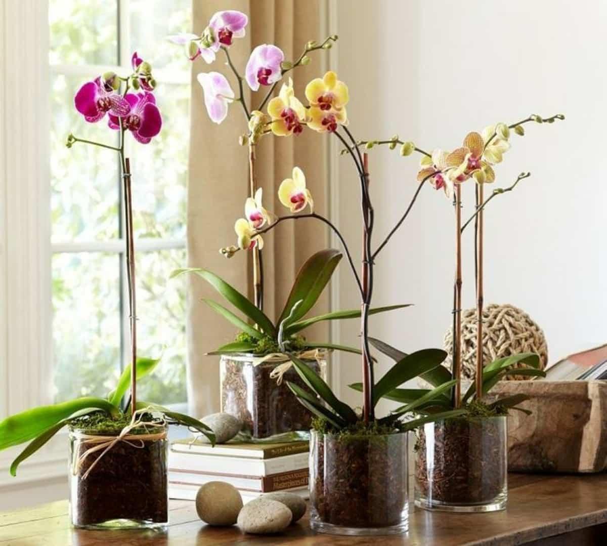 claves para decorar con orquideas tu hogar 9