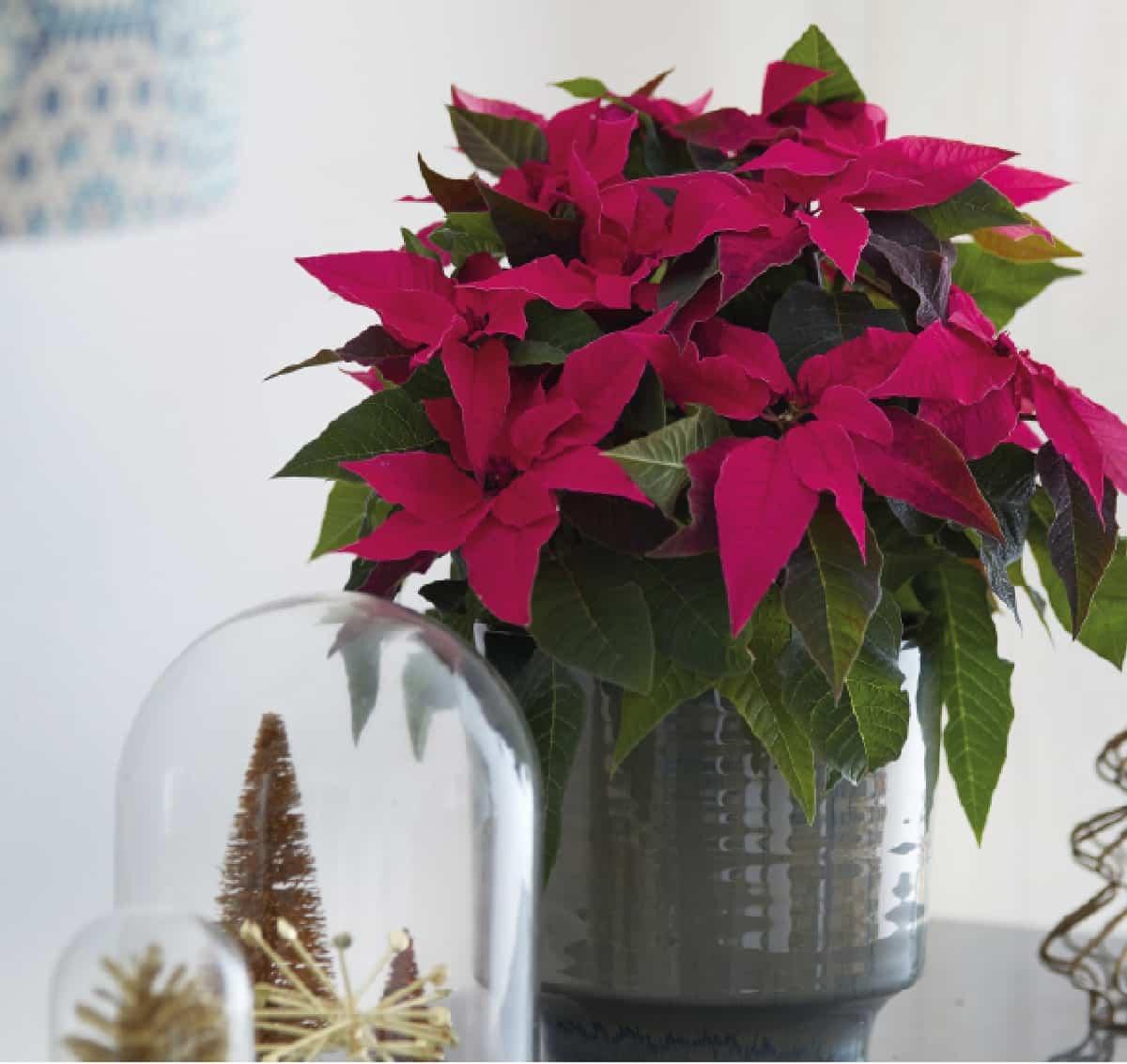 plantas de interior ideales para decorar tu hogar durante todo el ano 2