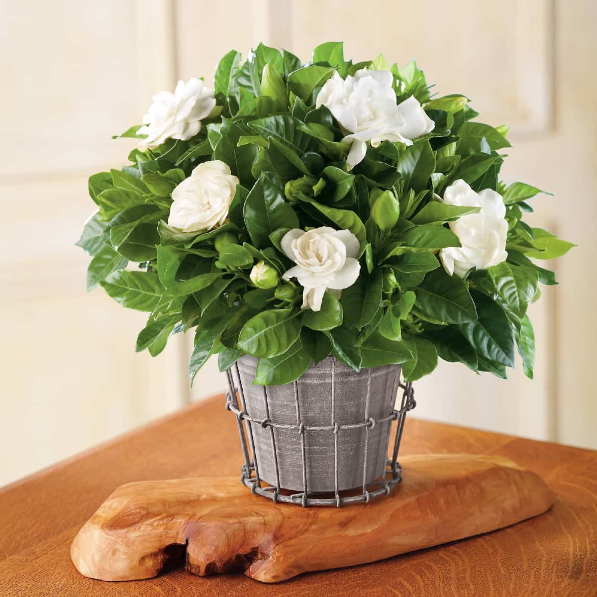 plantas de interior ideales para decorar tu hogar durante todo el ano 4